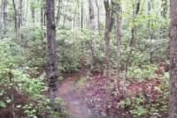 Chancellorsville Wilderness
